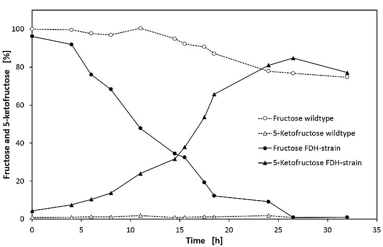 The comparison with the wild type (white symbols) is an impressive proof of how the conversion of fructose to 5-KF can be significantly enhanced in the recombinant strain (black symbols) through the addition of FDH [RWTH].